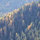 jesensko obarvani gozdovi