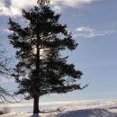 lepa drevesa na pobočju slivnice...