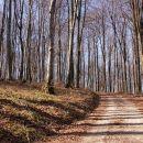 pa ša nazaj na gozdno cesto in desno proti vrhu Plešivice...