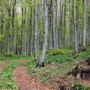 gozd nad colom