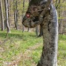 nenavadno gozdno bitje ob poti
