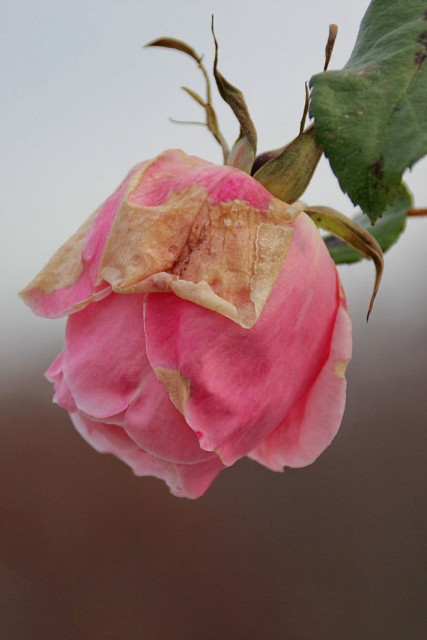 Zimsko cvetenje...